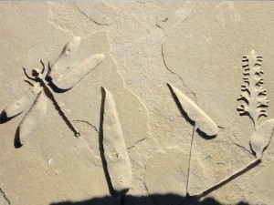 dragonfly etched stone